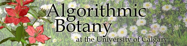 Algorithmic Botany at the University of Calgary